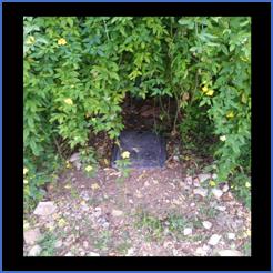 water meter under bush